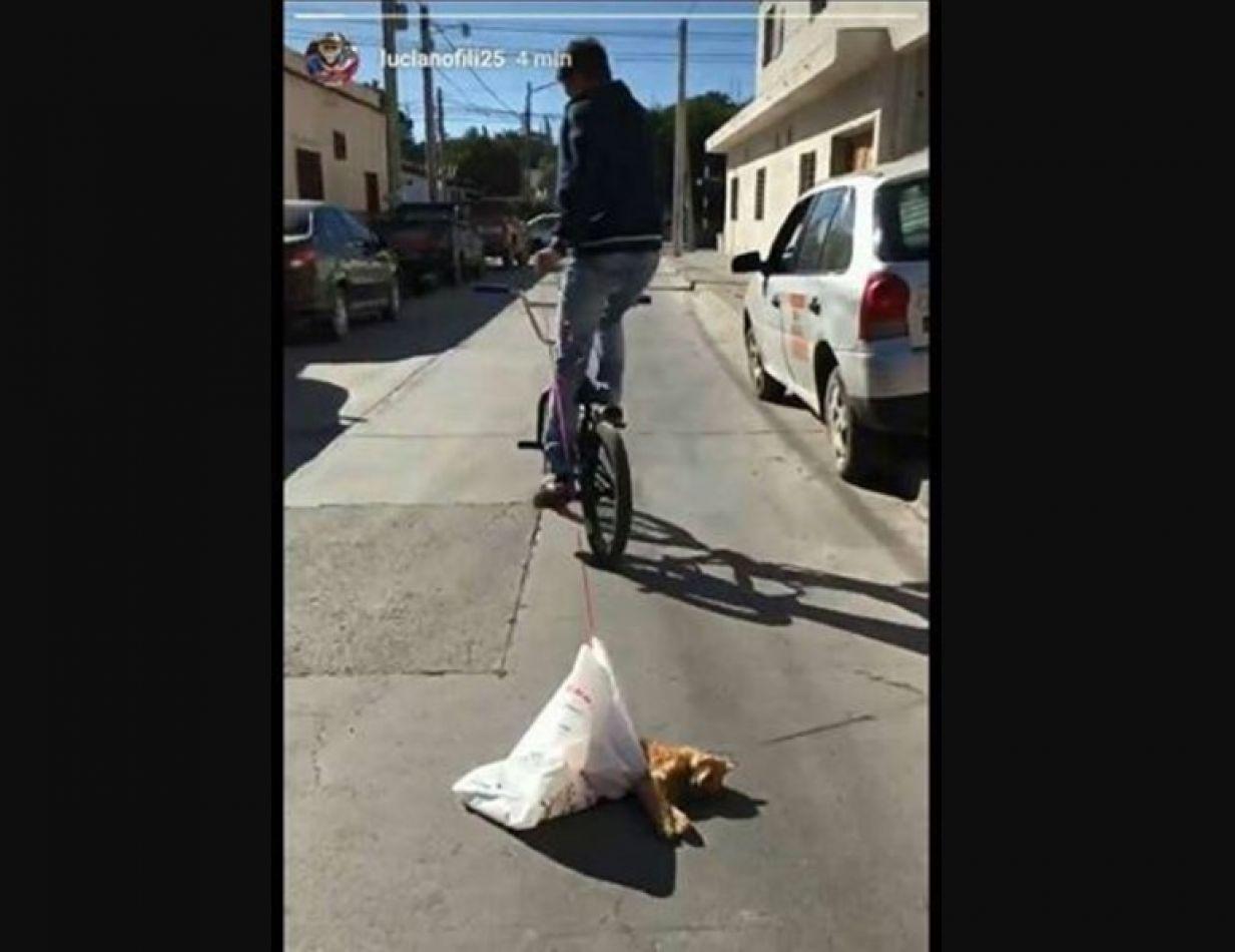 Salteño paseó a su gato muerto, atado a su bicicleta